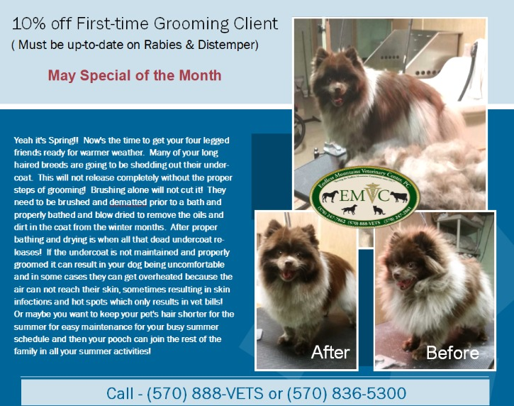 Recent Posts - Endless Mountains Veterinary Center