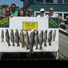 Henderson Harbor Fishing with Milky Way Charters - The Jim Schlieder party with their catch of Lake Trout & 2 Whitefish!